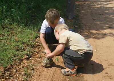 Tortoise Inspection